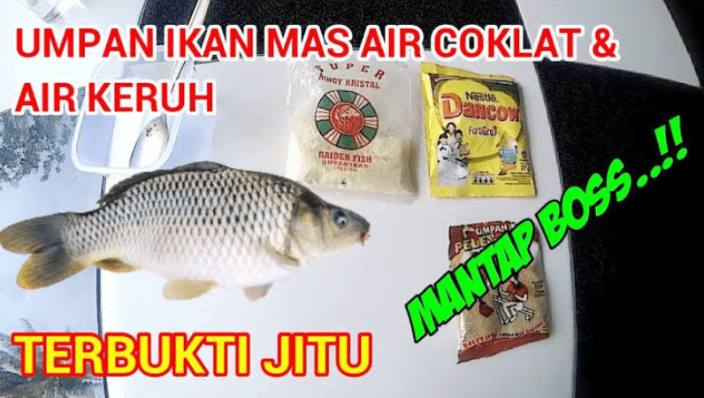 Umpan Ikan Mas Anti Gagal