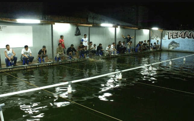 Umpan Jitu Ikan Mas Malam Hari