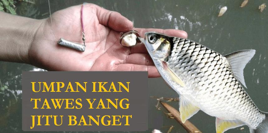 Umpan Ikan Tawes Dari Tempe Archives Hobi Mancing