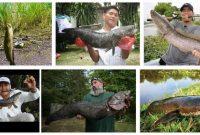 Mancing Ikan Gabus Dengan Teknik Mancing Casting