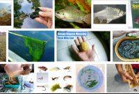 Umpan Ikan Nila Yang Ampuh Tiada Banding
