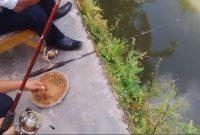 Umpan Mancing Ikan Mujair Yang Tak Ada Duanya