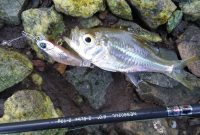 Mancing ikan seriding yang mudah dan efektif dapatnya