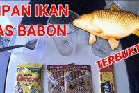 Umpan Yang Disukai Ikan Mas Babon